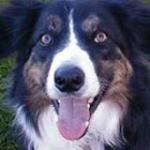 Bigriodog's Avatar