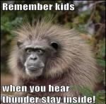 ThunderMonkey's Avatar