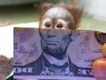 MonkeyMoney's Avatar